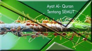 Ayat Al-Quran Tentang Semut Surah An-Naml ayat 18-19