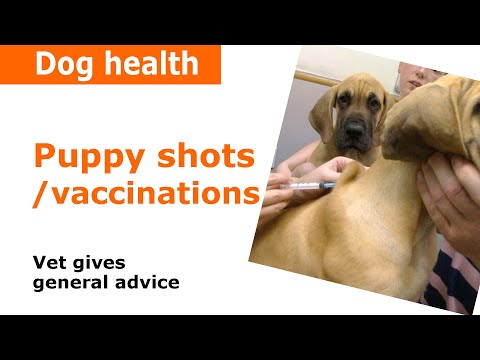 Download Lagu Puppy Vaccinations, injections & Shots - Vet Advice.mp3