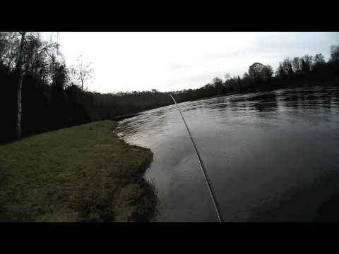 Salmon Fishing Scotland Spring Salmon Fly Fishing on the Tay...