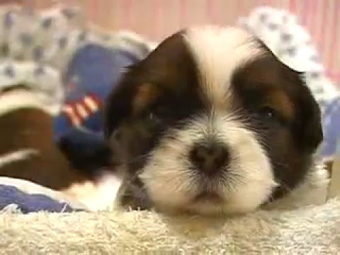 cute puppy Video