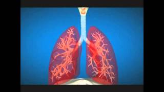 Our Respiratory System in Bengali Language