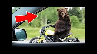 5 ANIMALS ACTING LIKE HUMANS | Funny Animals Compilation