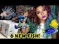 Lagu UNBOXING THE MOST EXPENSIVE RARE FISH IVE EVER OWNED! (SALTWATER)