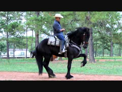 For Sale Se Vende Friesian Caballos Bailadores con Banda -- Shadow -- www.ranchoelcolmenon.com