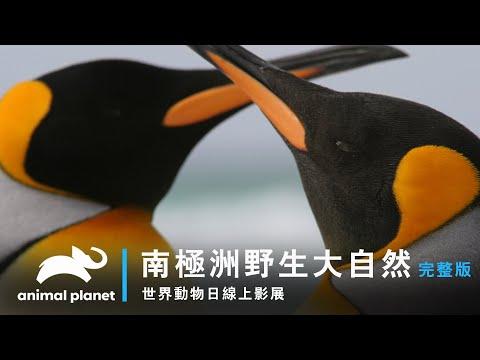 台灣-世界動物日線上影展