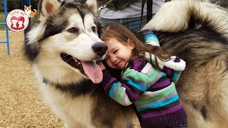 Dogs and Babies! Adorable Babies Playing With Dogs   Funny And Fails Videos 2019