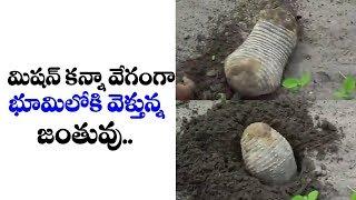 మిషన్ కన్నా వేగంగా భూములోకి వెళ్తున్న జంతువు | Viral Animal Hulchal In Social Media | TTM