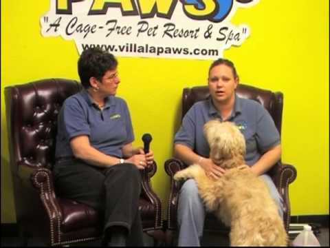 Grooming - Ear Cleaning Discussion with Michaela Muncy
