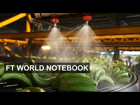 Australia's banana plague | FT World Notebook