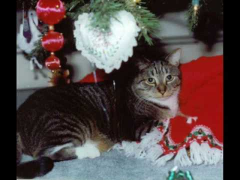 Dogs and Cats sing Christmas song.