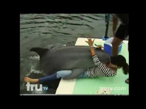Видео дельфин секс с дельфином поглядим