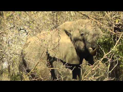 Rondreis Zuid Afrika 2013