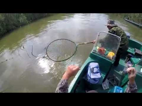 ловля сазана на жмыховницу