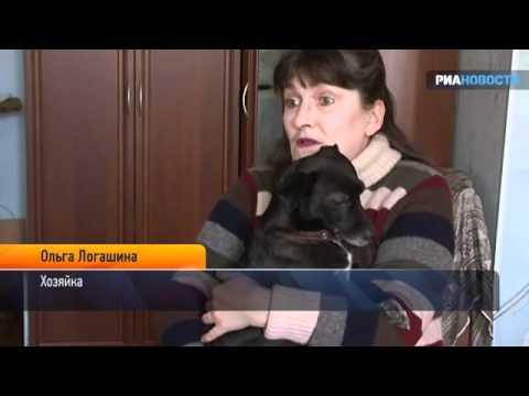 Собака отняла у кошки детенышей и стала их кормилицей
