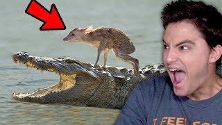 INACREDITÁVEL! Animais salvando outros animais!