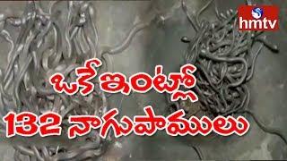 ఒకే ఇంట్లో 132 నాగుపాములు, పిల్లలు..! Odisha  | hmtv