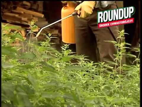 Chwasty Roundup