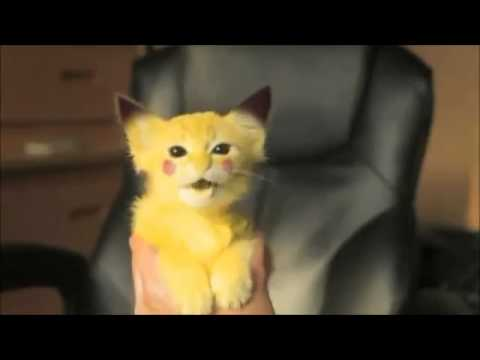 Gatinho Pikachu
