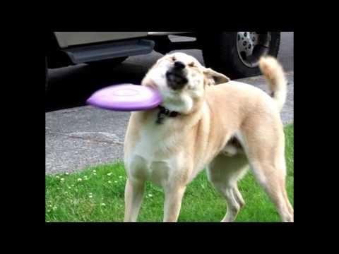 hqdefault frisbee doge know your meme
