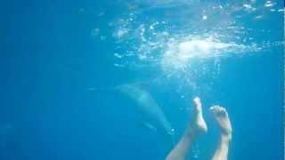 Guadeloupe Nage Avec Des Dauphins Sauvages Et Une Sir Ne