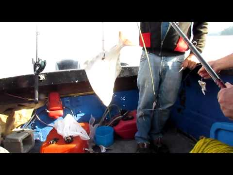 Halibut  Fishing in Prince Rupert