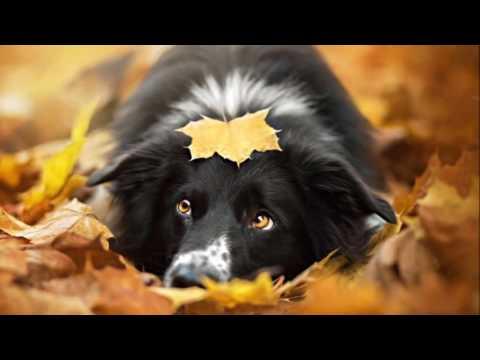 Чарівниця осінь