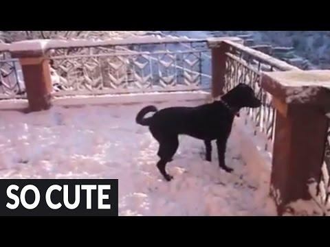 El perro se vueve loco de alegría al descubrir la nieve