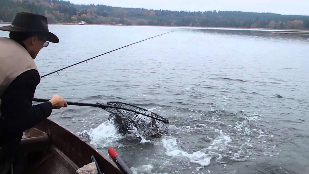 Puget sound salmon fishing giant chum youtube for Salmon fishing puget sound