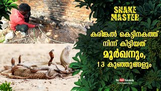 A cobra and 13 baby cobras spotted inside granite foundation   Vava Suresh   Snakemaster EP 465
