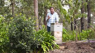 The Garden Gurus - Hints and Tips Beehives