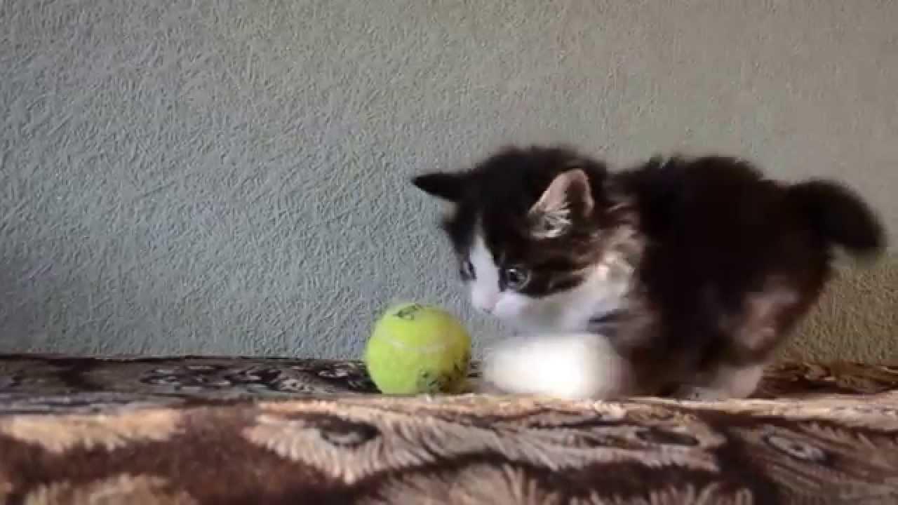 Zdolności łowieckie kota