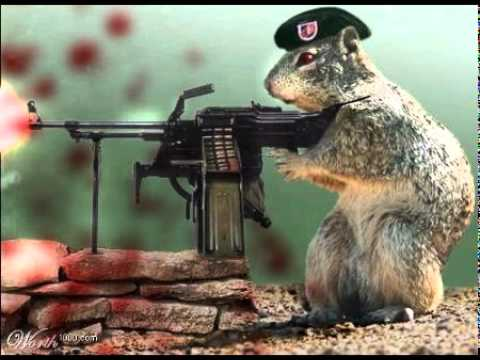 Squirrels & Guns - YouTube