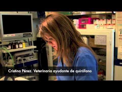 veterinario de loros en España