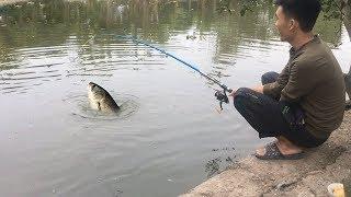 Cần Câu Cá Tự Giật Được Cá Trắm Cỏ Khủng - Đóng Cá Phát Nào Chết Phát Đó (449K)