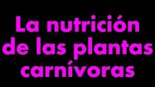 La nutrición de las plantas carnívoras