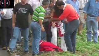 Đấu Bò Tót- Lễ Hội đua bò tót  Nguy Hiểm Nhất Thế Giới -Đấu Bò  tót cực hay