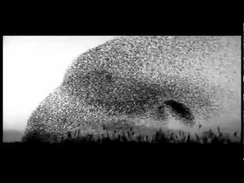 Elbow - Starlings