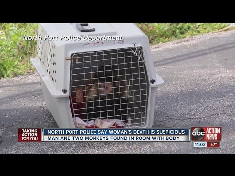 North Port police investigating suspicious death in motel room; two monkeys found in room