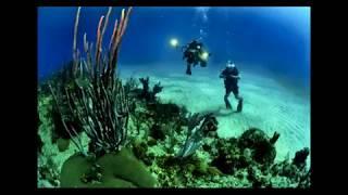 Living plants in underwater