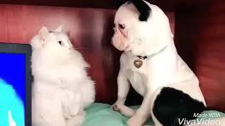 FUN  FUNNY CAT & DOG
