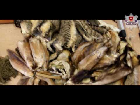 Ludwin: Wyprawione skóry kotów w domu 54-latka