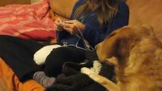 download lagu Cat Tries To Knit - Katze Strickt Mit gratis