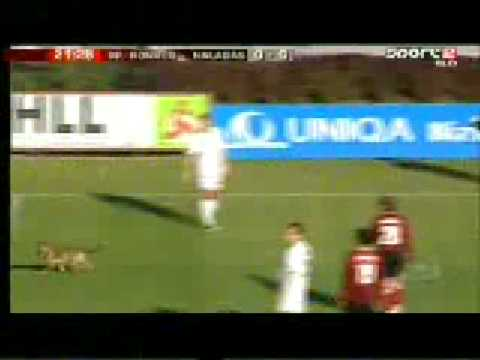 Dog Joins Soccer/football Game