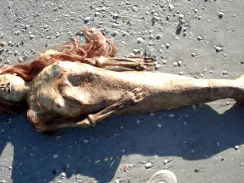 Dead Mermaid Discovered in Florida