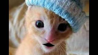 Tiny pussy with a winter hat