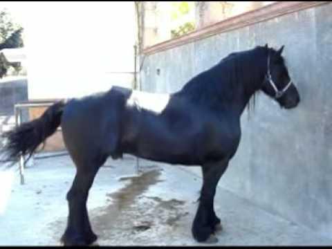 joan sebastian m225s precavido con caballos worldnewscom