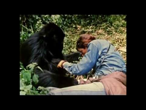 I Gorilla di Montagna (il film perduto di Dian Fossey) - trailer ita HD