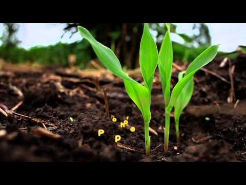 Agriculture Biologique au Togo