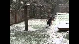 "Great Dane & ""sisters"" see 1st snow"