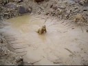 Quarry Mud Playing